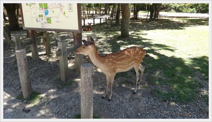 20150714奈良公園049.JPG