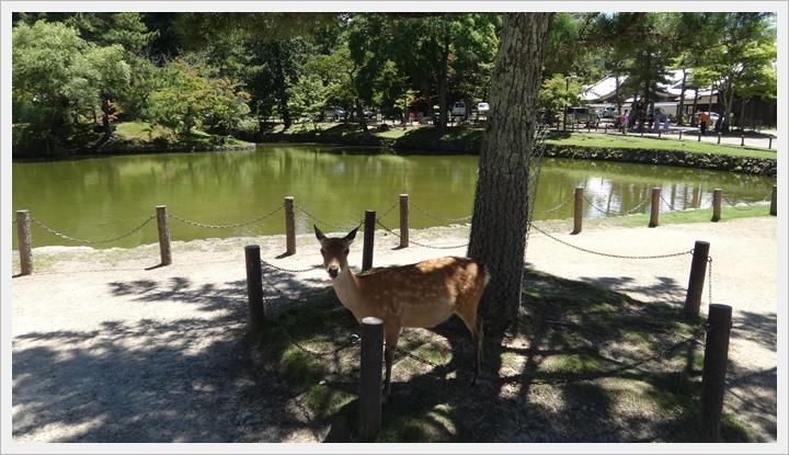 20150714奈良公園063.JPG
