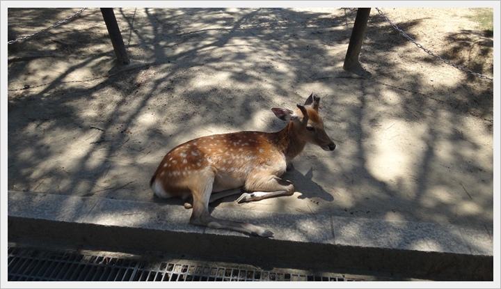 20150714奈良公園080.JPG