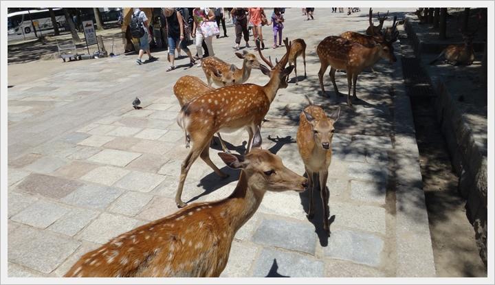 20150714奈良公園081.JPG