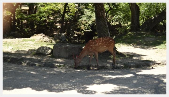 20150714奈良公園082.JPG