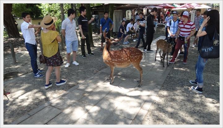 20150714奈良公園083.JPG