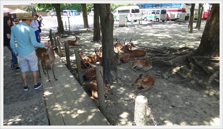 20150714奈良公園084.JPG