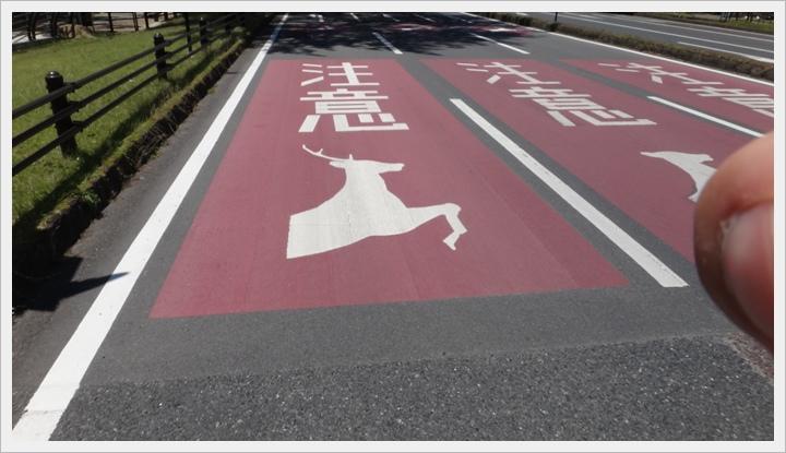 20150714奈良公園089.JPG