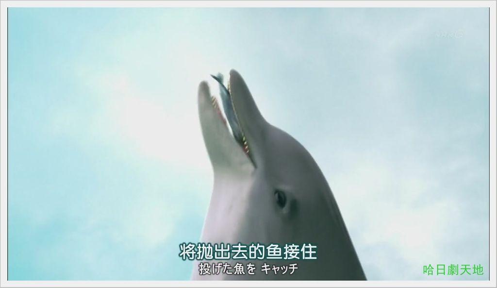 NHK-夏季日劇-水族館女孩 (20).JPG