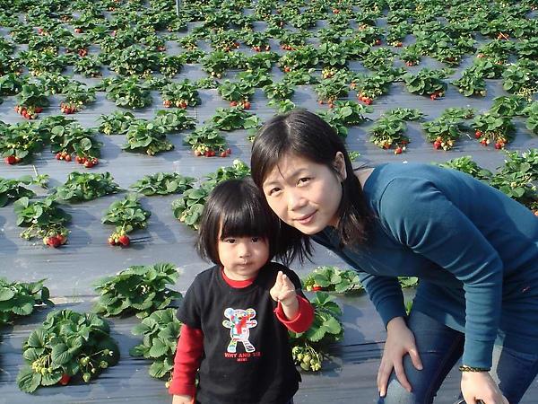 關西採草莓2.jpg