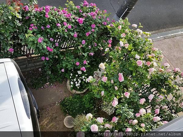 Erin's秘密小花園