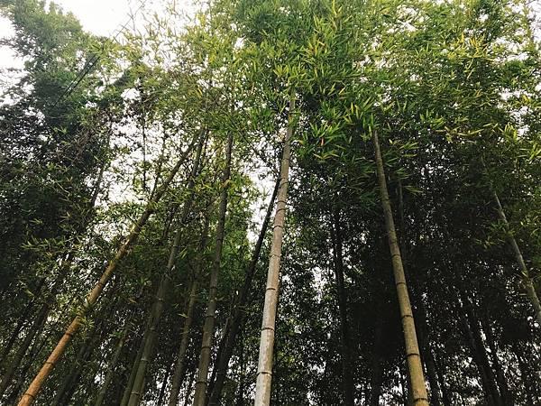 金台灣旁竹林