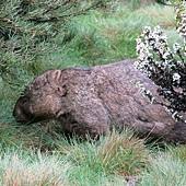 袋熊出沒中!