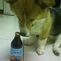 狗狗啤酒讚啦!