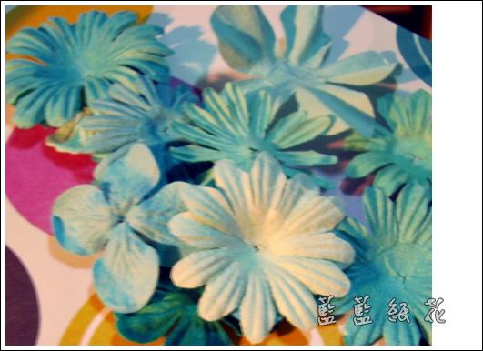 藍藍紙花.JPG