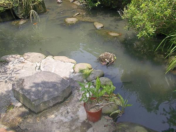 照門休閒農業區 九芎湖劉家莊燜雞 室外有涼亭可吃飯 旁邊的小塘