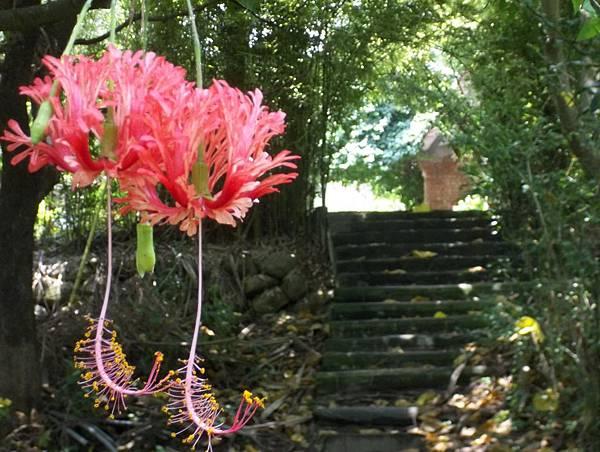 照門休閒農業區 箭竹窩秀風農場 花中的樹道
