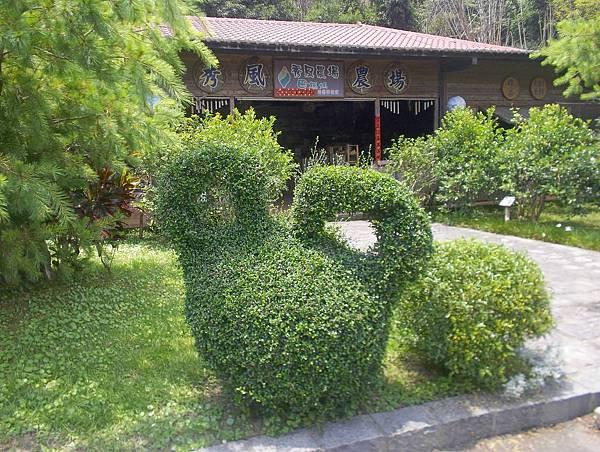 照門休閒農業區 箭竹窩秀風農場  米老鼠造型的園藝