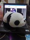 動物園熊貓館買的小熊貓玩偶