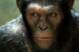 ape01.jpg