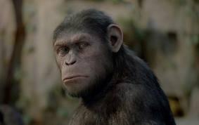 ape02.jpg