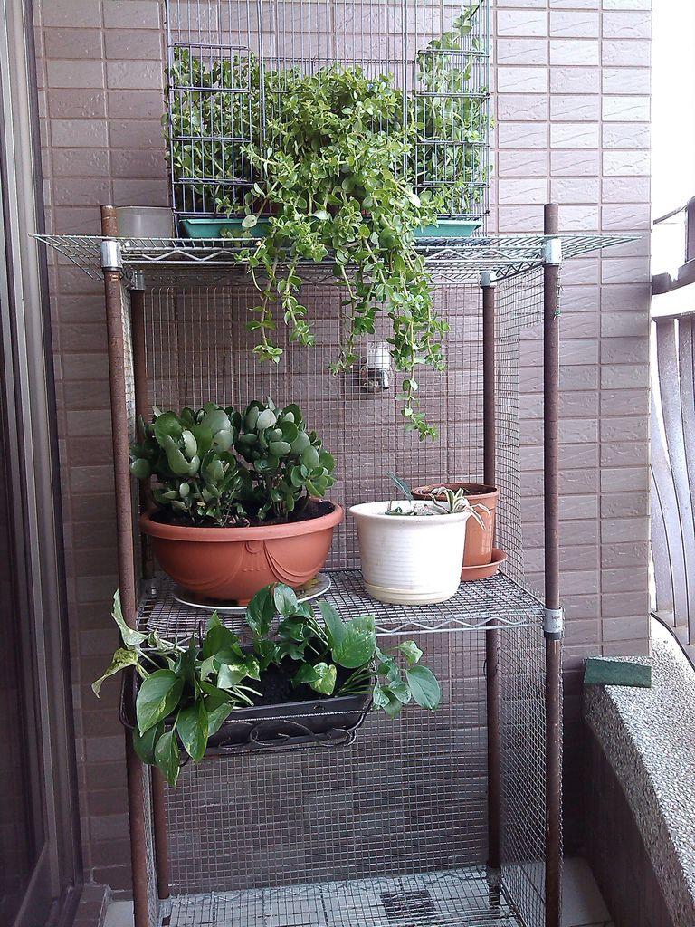 寵物籠子 改裝成花架