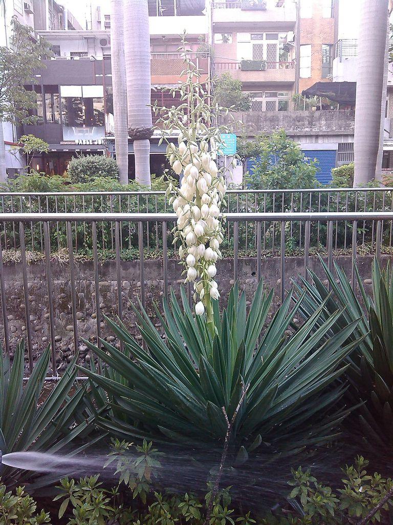 新竹 三民路  綠園道