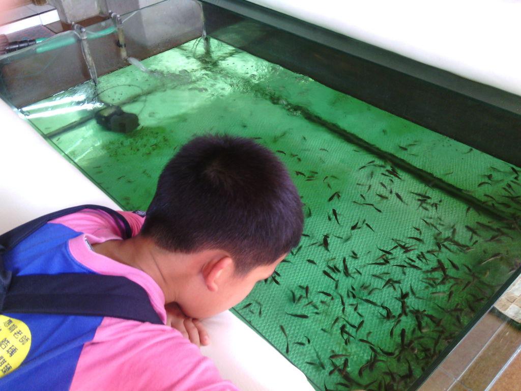 烏布傳統文物批發市場 SPA 商店門口的 Fish SPA 池