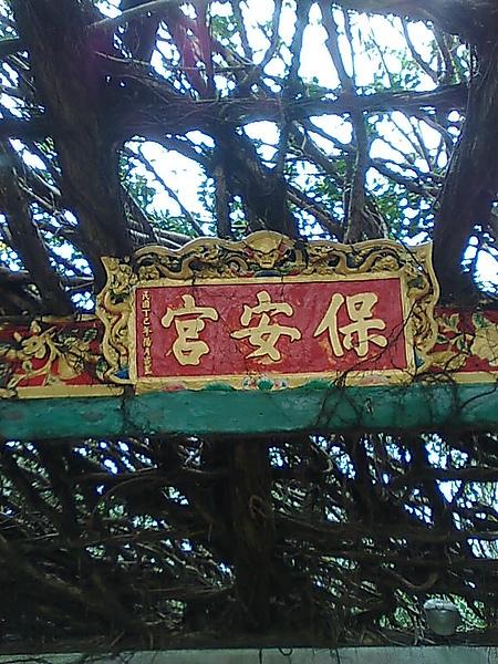 澎湖保安宮通樑古榕