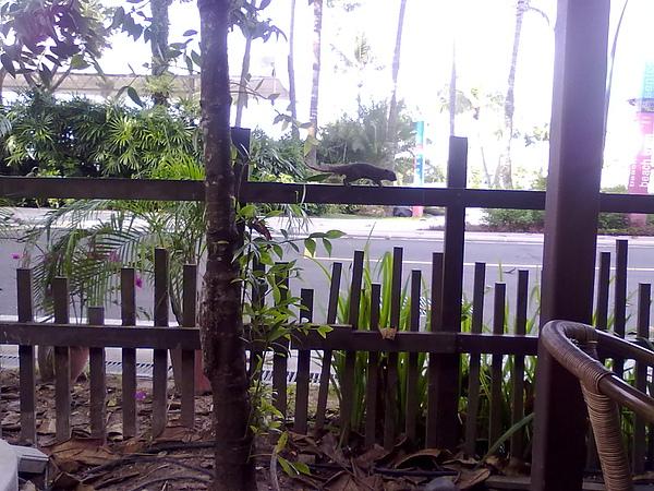 新加坡Siloso Beach Resort的庭院 -- 看見松鼠