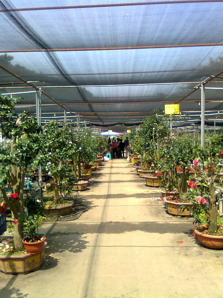 2011新竹市茶花季
