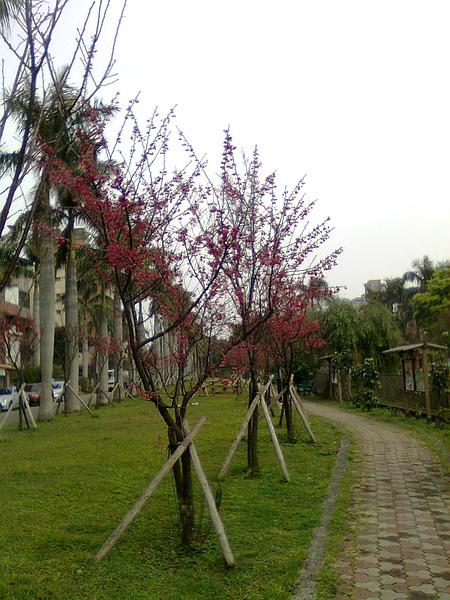 綠園道8.JPG