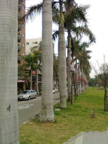 綠園道5.JPG