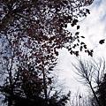 枯樹落葉也很詩情畫意