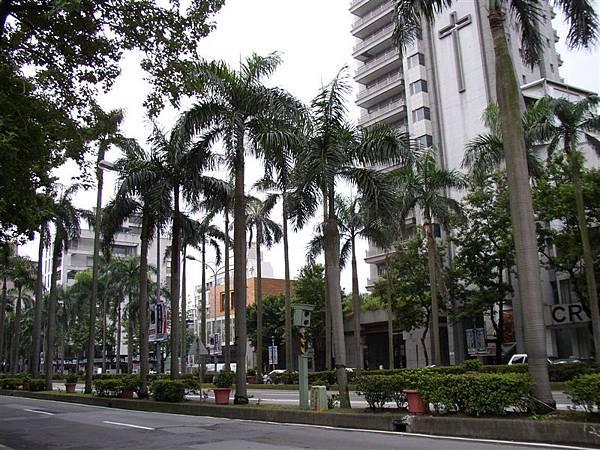 112.仁愛路二段的椰子樹