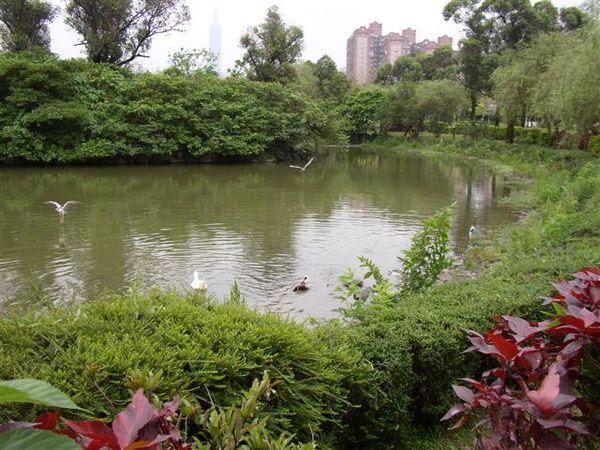 152.大安森林公園的湖