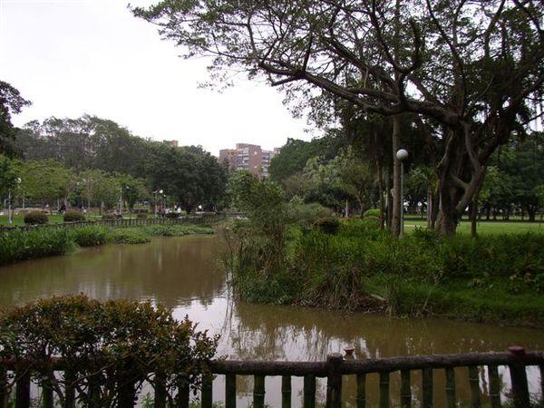 133.青年公園蓮花池