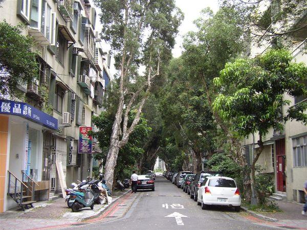 351.樹蔭濃密的中央社區