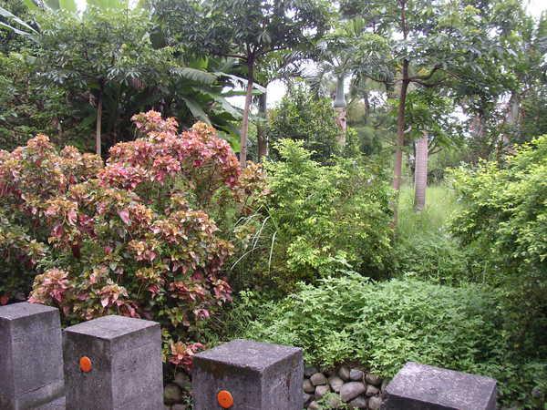 114.台大農場邊的王留公圳第一幹線