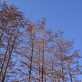日本。北海道-幸福車站的天空