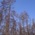 日本。北海道-花佃牧場的樹林
