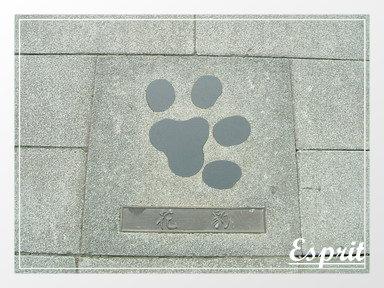 這是花豹的腳型