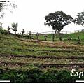 發現花園 011