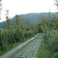 踏青步道 3