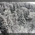 20161225 東北之旅-01-藏王樹冰 025.jpg