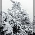 20161225 東北之旅-01-藏王樹冰 045.jpg