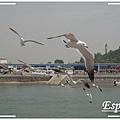 韓國之旅 0152.jpg