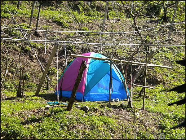 男生們搭起來的帳篷
