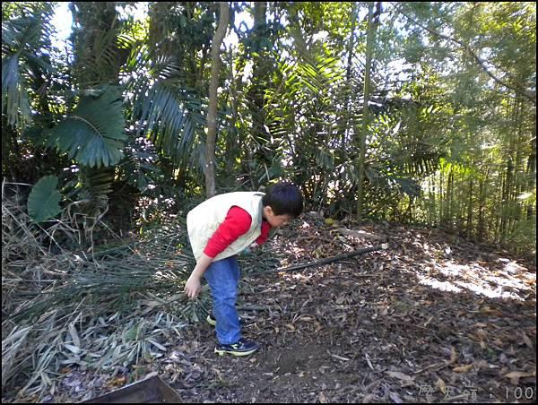 努李的撿樹枝給哥哥們去生火