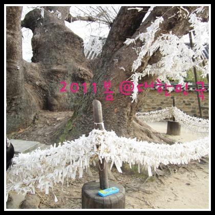 村落中有棵老樹,旁邊掛滿遊客們的許願紙條