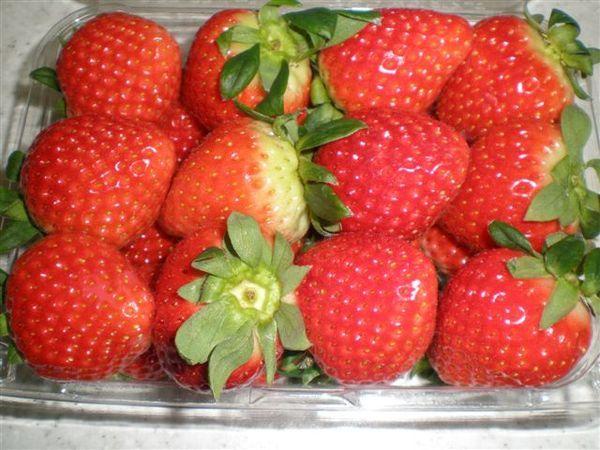 手掌大的草莓