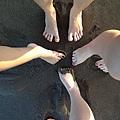 猜猜哪一個是我的腳 (戲份最重的就是了)