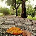 下過雨的人行道也美