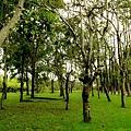 綠樹,開始飄起小小雨了